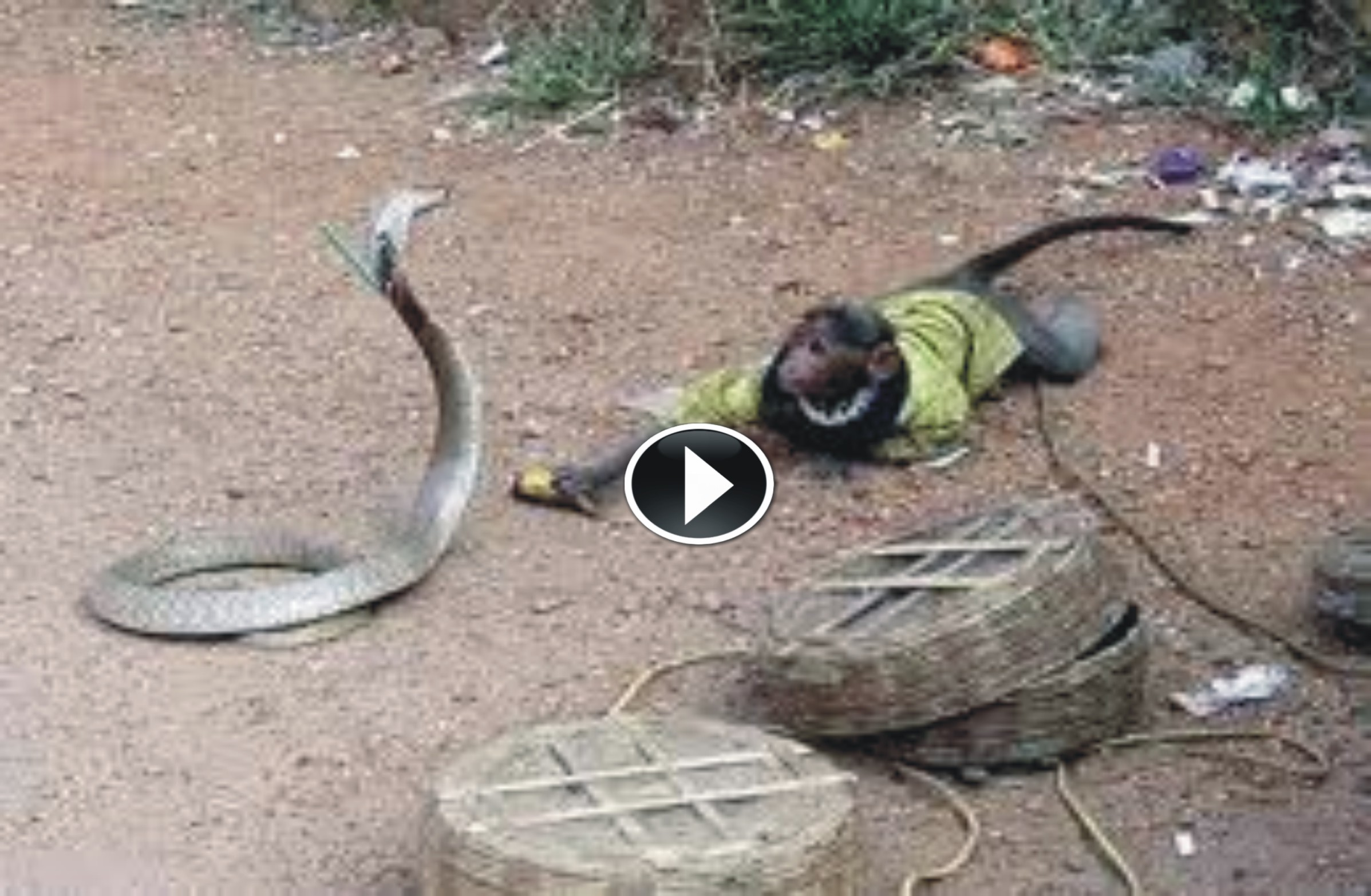 Incredible Fight Between Snake And Monkey